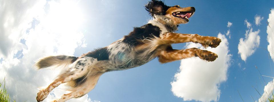 active-jumping-dog